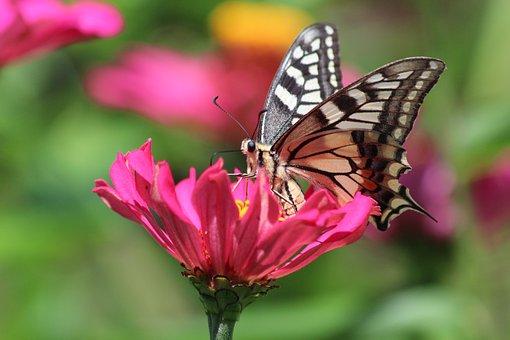 butterfly-3894124__340.jpg