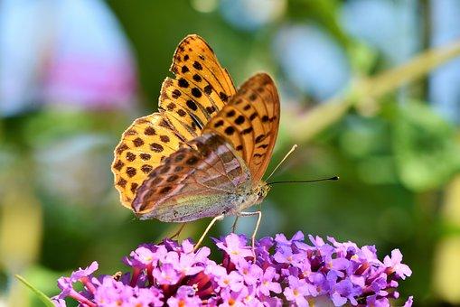 butterfly-3559186__340.jpg