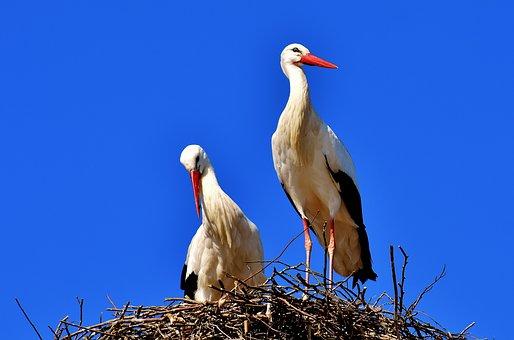 storks-2525893__340.jpg